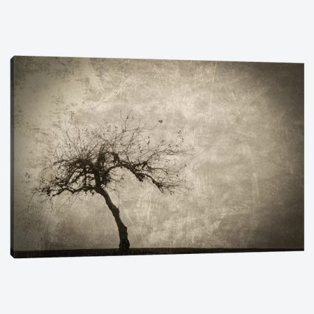 Alone In Winter Canvas Print #DSC4} by Don Schwartz Art Print