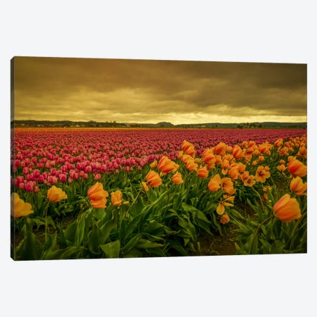Leaning Tulips I Canvas Print #DSC50} by Don Schwartz Canvas Artwork
