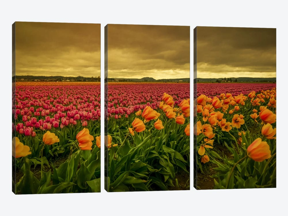 Leaning Tulips I by Don Schwartz 3-piece Canvas Art