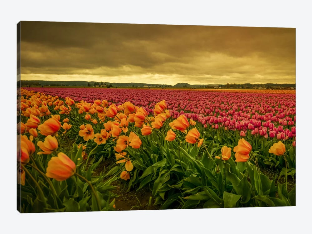 Leaning Tulips II by Don Schwartz 1-piece Canvas Print