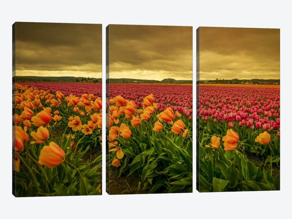 Leaning Tulips II by Don Schwartz 3-piece Art Print