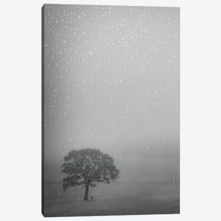 Lone Oak In The Rain Canvas Print #DSC52} by Don Schwartz Canvas Art