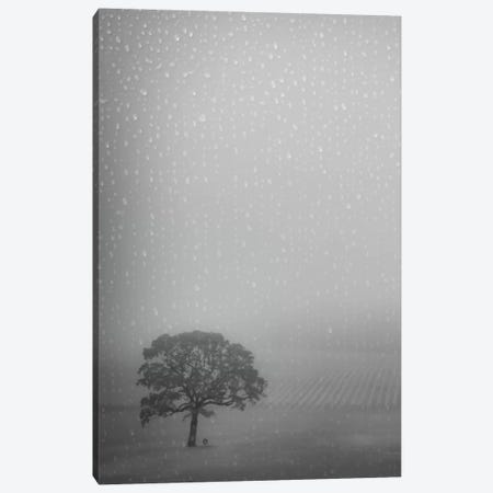 Lone Oak In The Rain Canvas Print #DSC52} by Don Schwartz Canvas Art
