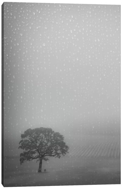 Lone Oak In The Rain Canvas Art Print