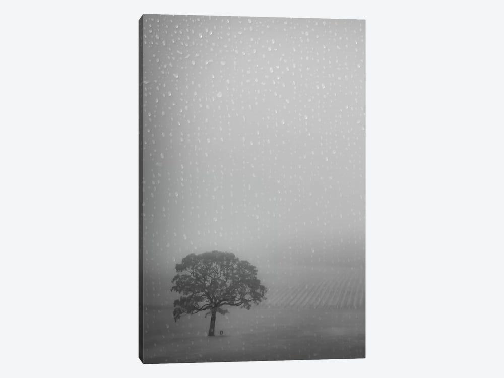 Lone Oak In The Rain by Don Schwartz 1-piece Canvas Artwork