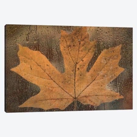 Maple Leaf In The Rain Canvas Print #DSC54} by Don Schwartz Art Print