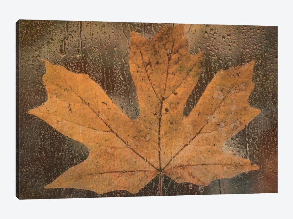 Maple Leaf In The Rain by Don Schwartz 1-piece Canvas Art