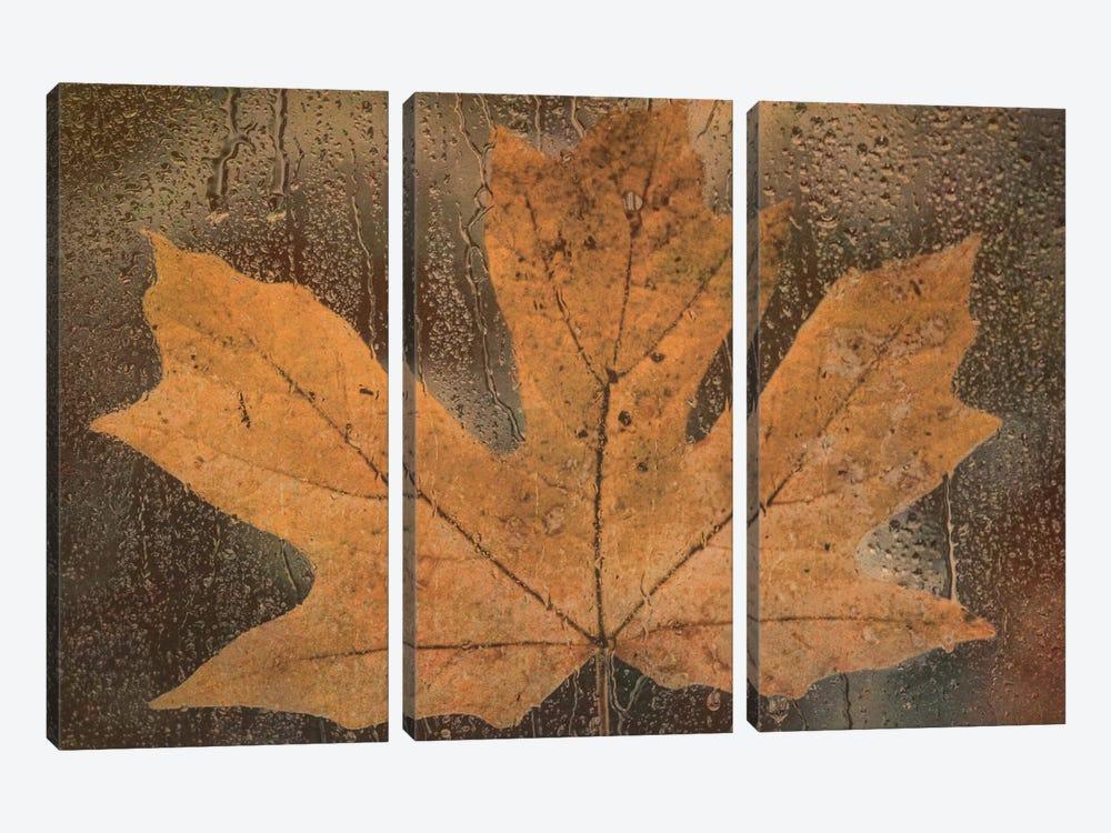 Maple Leaf In The Rain by Don Schwartz 3-piece Canvas Artwork