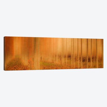 Misty Enchantment I Canvas Print #DSC57} by Don Schwartz Art Print