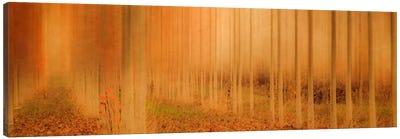 Misty Enchantment I Canvas Art Print