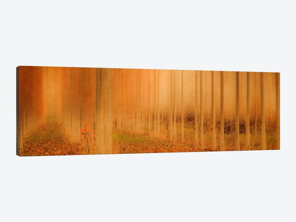 Misty Enchantment I by Don Schwartz 1-piece Canvas Print