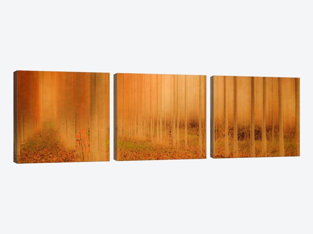 Misty Enchantment I by Don Schwartz 3-piece Art Print