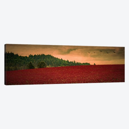 Over The Clover Canvas Print #DSC62} by Don Schwartz Canvas Art Print