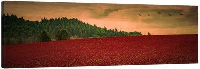 Over The Clover Canvas Art Print