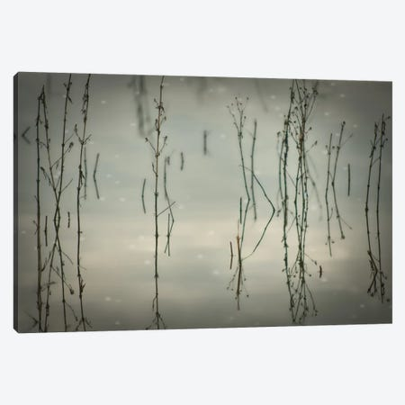 Reeds Canvas Print #DSC67} by Don Schwartz Canvas Artwork
