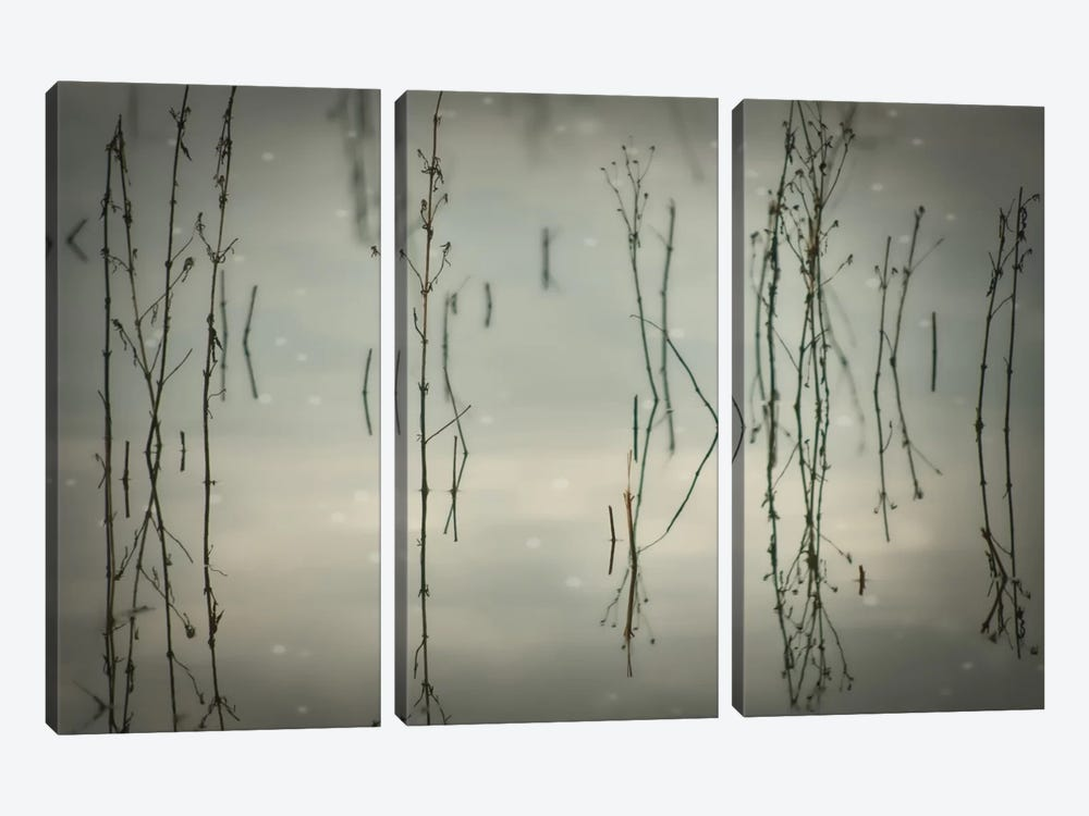 Reeds by Don Schwartz 3-piece Canvas Artwork