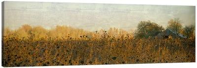 Rustic Barn On A Sunny Day Canvas Art Print