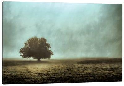 Silent And Still Canvas Art Print