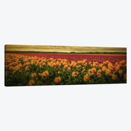 Spring Field Canvas Print #DSC80} by Don Schwartz Art Print