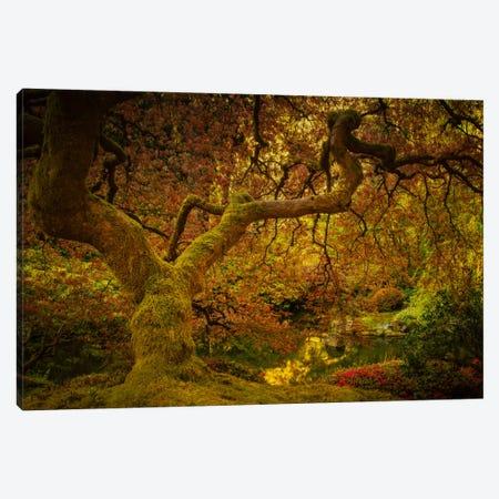Spring Maple Canvas Print #DSC82} by Don Schwartz Canvas Print