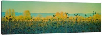 Sunflowers In Autumn Canvas Print #DSC88
