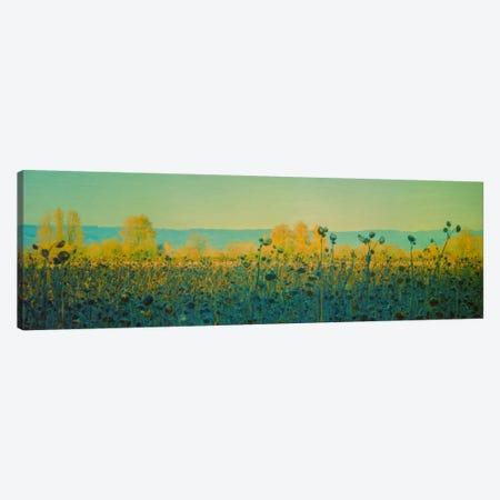 Sunflowers In Autumn Canvas Print #DSC88} by Don Schwartz Canvas Art Print