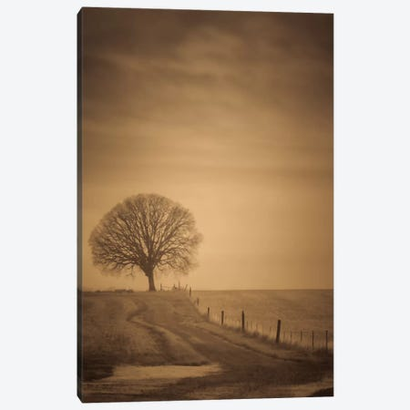 The Tree At The End Of The Path Canvas Print #DSC92} by Don Schwartz Canvas Artwork