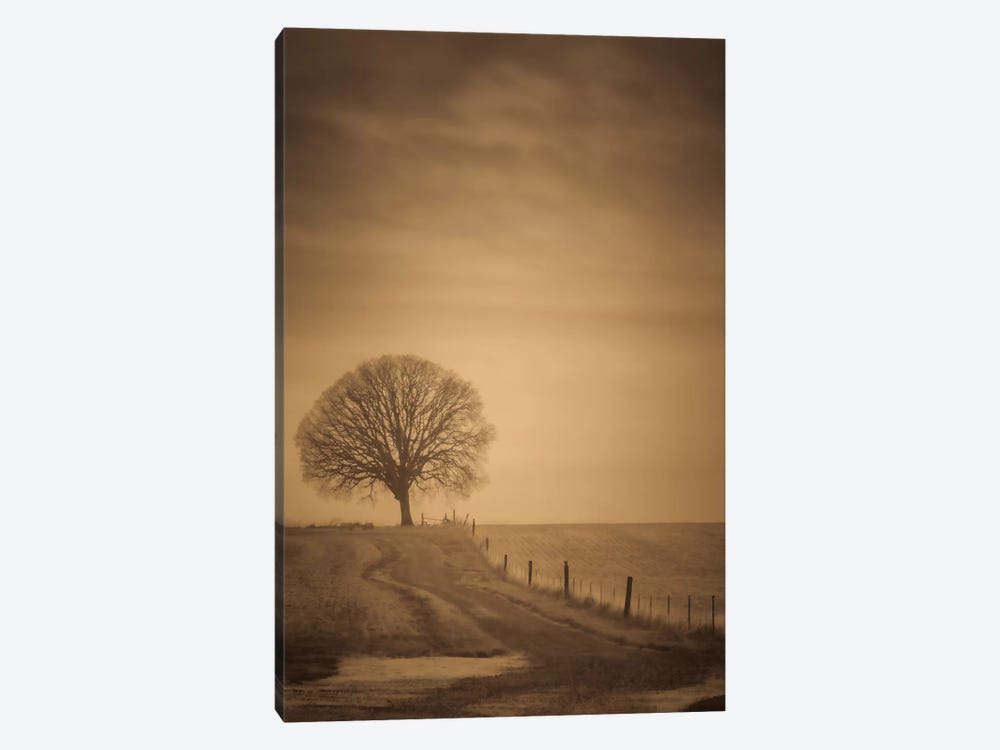The Tree At The End Of The Path by Don Schwartz 1-piece Canvas Wall Art