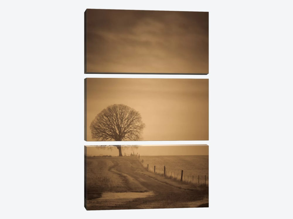 The Tree At The End Of The Path by Don Schwartz 3-piece Canvas Wall Art