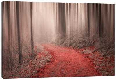 Through The Woods III Canvas Art Print