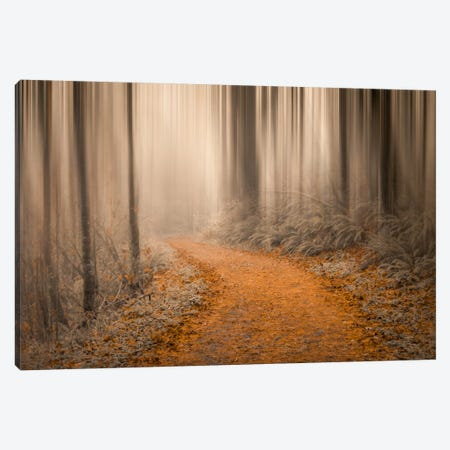 Through The Woods IV Canvas Print #DSC94} by Don Schwartz Canvas Print