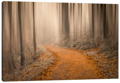 Through The Woods IV Canvas Art Print
