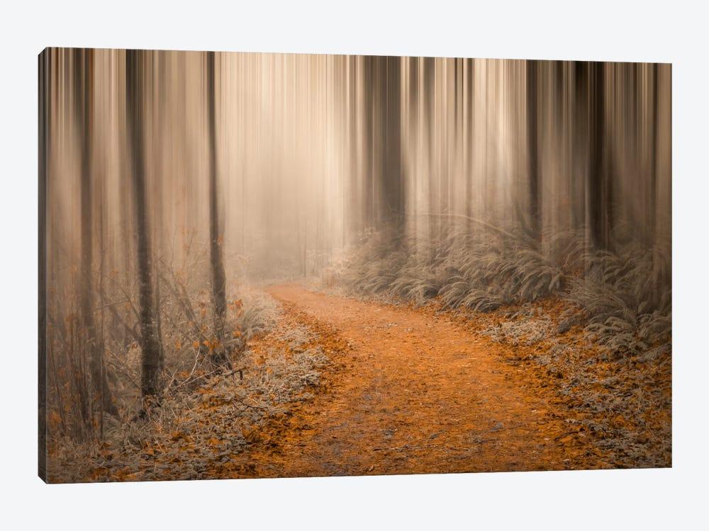 Through The Woods IV by Don Schwartz 1-piece Canvas Art