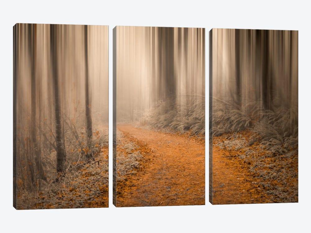 Through The Woods IV by Don Schwartz 3-piece Canvas Artwork