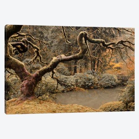 Transcendent Maple Canvas Print #DSC95} by Don Schwartz Canvas Art Print