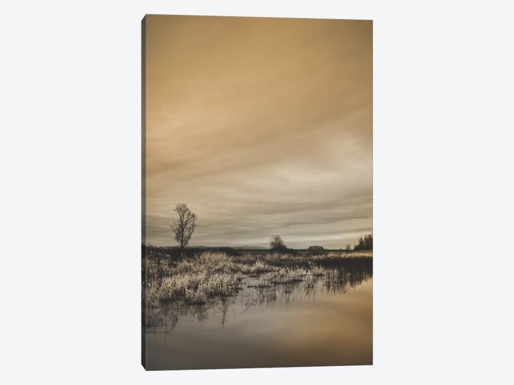 Tree By The Pond by Don Schwartz 1-piece Canvas Art