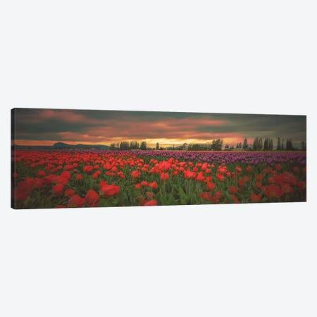 Tulips Aglow Canvas Print #DSC97} by Don Schwartz Canvas Print
