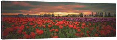 Tulips Aglow Canvas Art Print