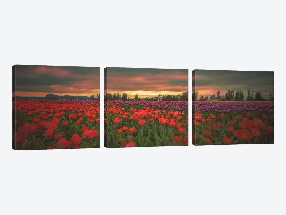 Tulips Aglow by Don Schwartz 3-piece Canvas Print