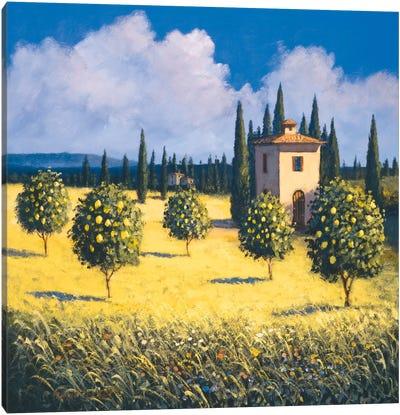 Sun Kissed Orchard I Canvas Art Print