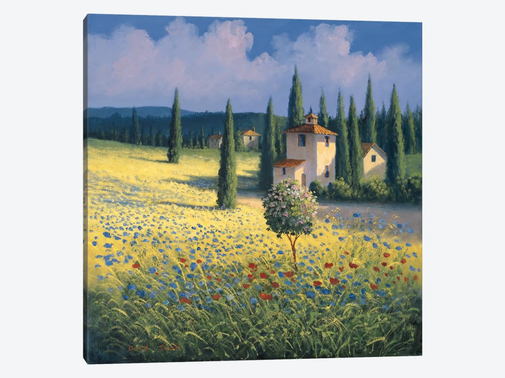 Tuscan Poppies I by David Short 1-piece Art Print