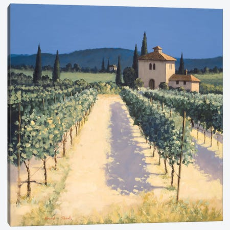 Vineyard Shadows Canvas Print #DSH23} by David Short Canvas Artwork