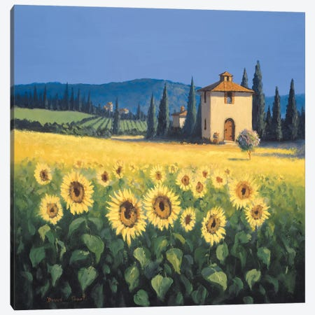 Golden Warmth Canvas Print #DSH25} by David Short Canvas Print