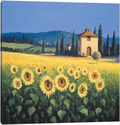 Golden Warmth I Canvas Art Print