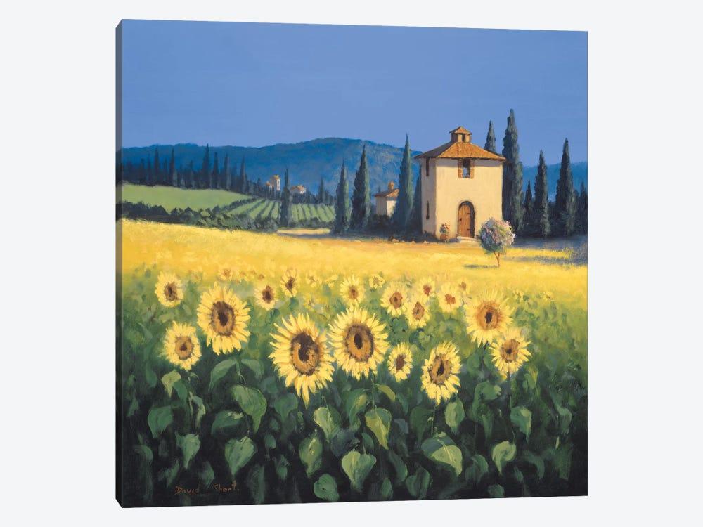 Golden Warmth I by David Short 1-piece Canvas Artwork