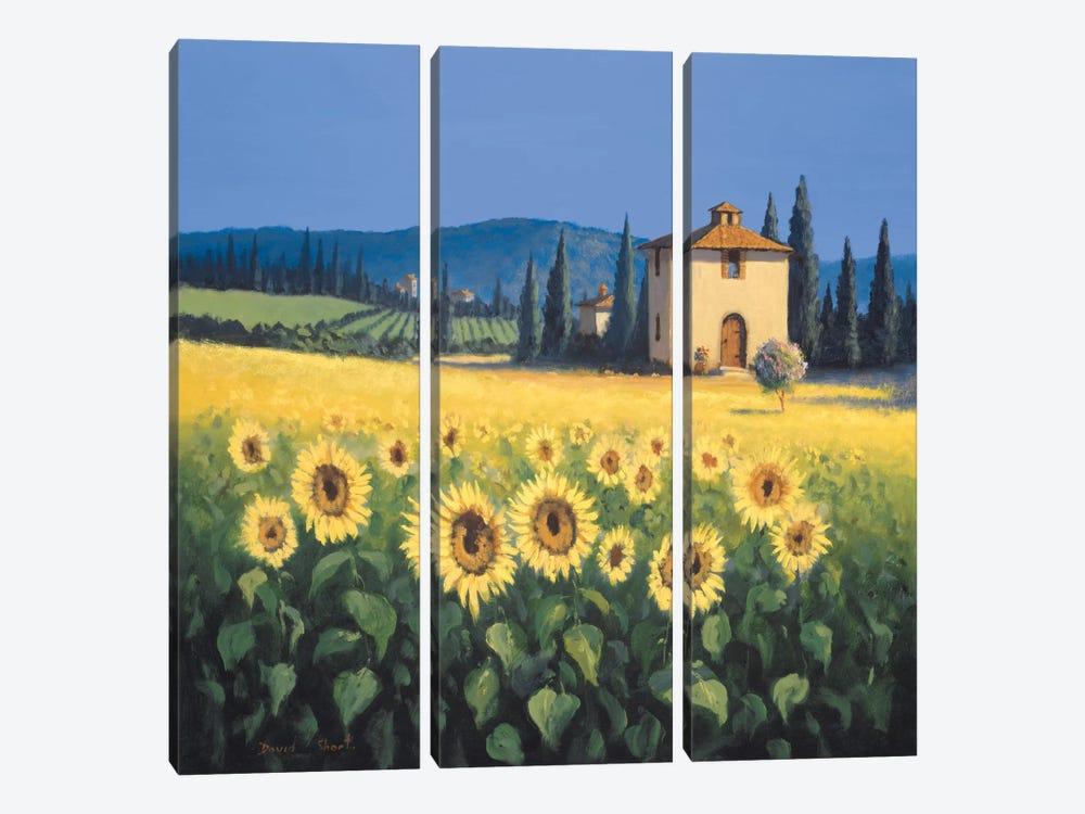 Golden Warmth I by David Short 3-piece Canvas Artwork