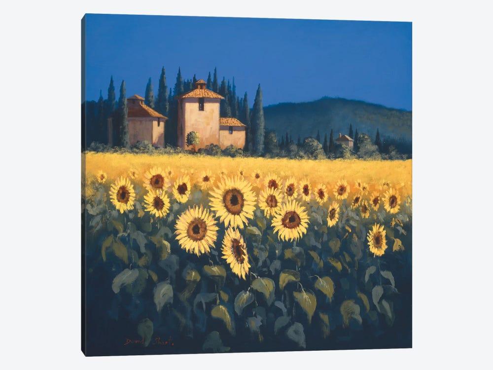 Golden Warmth II by David Short 1-piece Canvas Print