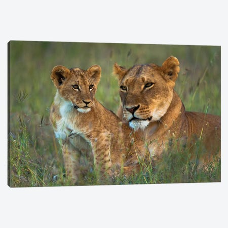 Lioness With Cub At Dusk, Ol Pejeta Conservancy, Kenya Canvas Print #DSN2} by Design Pics Canvas Art Print
