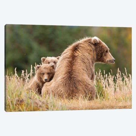Coastal Grizzly Sow With Her Spring Cubs At Hallo Bay, Katmai National Park, Alaska Canvas Print #DSN4} by Design Pics Canvas Artwork
