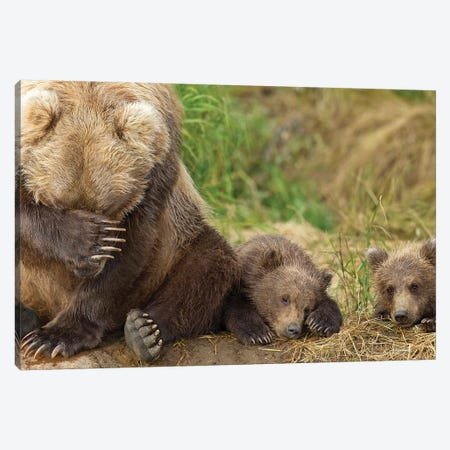 A Brown Bear Mother And Her Cubs Resting On The Bank Of Grizzly Creek In Katmai National Park, Southwest Alaska, Summer Canvas Print #DSN5} by Design Pics Canvas Wall Art